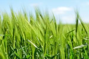 Milyen mezőgazdasági abroncsokat forgalmaztok ?